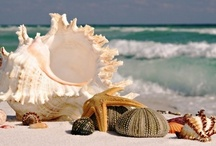 Just Beachy / by Deb Worrell