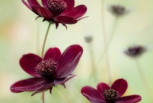 Gardening / by Michaela Cooper