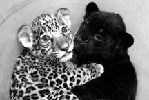 Animals / Anything cute / by Jenn Bittysweet