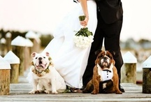 Wedding Things / by Lindsey Robus