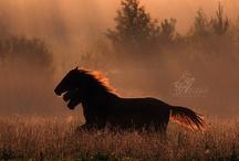 Equine Fantasies