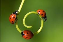 ladybugs (:::)0-8 / by Katie Light