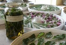 magical herbs