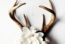 Bones and Antlers / by Deb Worrell