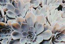 flowers | botanical | gardening