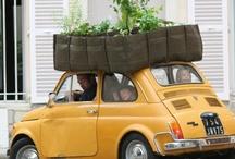 :: Transport ::