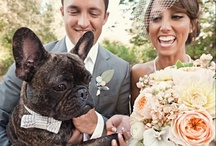 Pets in Weddings / Dogs, Cats, Birds, and all other pets in your ceremony.  Furry little scene stealers.