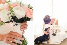 WEDDING ♥ DOGS / Dogs at weddings!