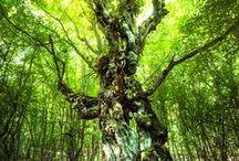 Kouzlo stromů