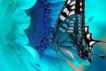 Motýli / Motýlci živí, malovaní, kreslení,vyšití, patchworkoví....