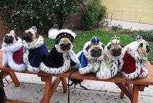 Pugs. / Uh... pugs.