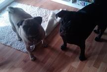 Bad puppies!