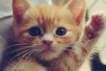 Ah! Cutez Animalz!!! / by Jessica