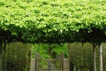 Architecture_Garden