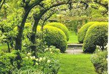 Garden / by Diána Princz