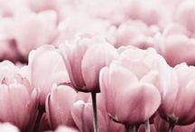 Flowers / by Diána Princz