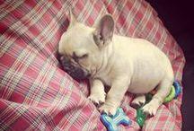 Puppy Love / Add a little cuteness to your life / by Graziela Gems