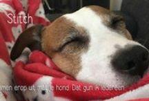 Hondenverhalen / Hondenbazen en hondenliefhebbers vertellen de mooiste verhalen over hun hond of honden in het algemeen.