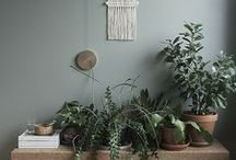 botanical beauty / Bring the beauty of nature into your home