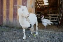 Amazing Animal Rescues / by VegNews Magazine