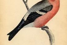 vintage.....birds / by Jayne Kearl