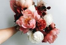 flowers / Blossoms, blooms, floral design and bouquets