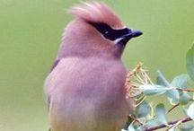 Birds! / by Amelia Batchelor