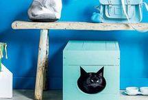 Home Improvement / by Amelia Batchelor