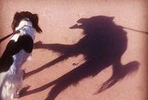 Doggies / by Amelia Batchelor