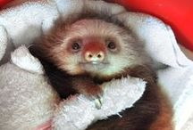 SMILE: SLOTHS / Because they're the best... and the slowest... and the sleepiest!