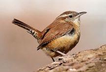 Birds I've seen! / All the feathered lovelies I've seen so far! / by Amelia Batchelor