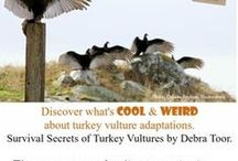 My Animal Adaptations Book: Survival Secrets of Turkey Vultures / The Book, The Teachers's Guide & other learning resources, Book Reviews (Kids books, ecoliteracy, animal adaptations)