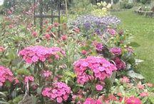 Garden / Tutorials and inspiration for the garden