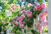 Fabulous Flowers ~ Floribunda ~ Fiori / Flowers &