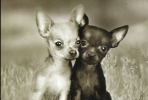 Canines / ....simply melts your heart.... / by Jessy Lim