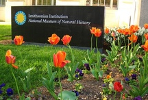 Visiting NMNH / http://www.mnh.si.edu/visit/ / by Smithsonian's NMNH