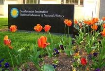 Visiting NMNH / http://www.mnh.si.edu/visit/
