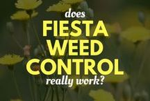 Weed Control / Win the battle against weeds. Identify them here!