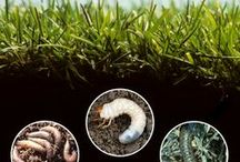 Insect Control / Get your eyes down to soil level and inspect for insects! Identify them here.