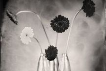 Alternative & Antique Photography