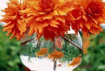 Orange you Glad / by Kellie Baucom