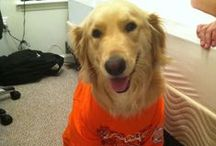 Hokie Pets / Because our pets are Hokies, too! (Send us your submissions at http://bit.ly/vtsocial) / by Virginia Tech