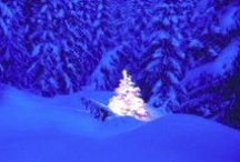 """GOTTA LUV CHRISTMAS TREES! / This is my """"go to board"""" to find out all what I need to know about Christmas trees.  Ideas for creating and decorating..as well as a collection of trees that will take your breath away (if the cold doesn't take it first!)."""