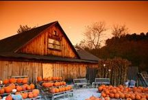 The Fall of the Year / Pumpkin-y decor, apple picking time, comfort food on cool evenings, beautiful foliage...not to mention the World Series!  Halloween! Thanksgiving!