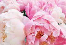 flowers + plants / #flowers #pretty #bouquet #love #plant #plants #garden #nature