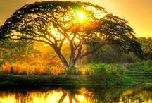 Nature (God's Creation) ☀