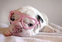 P E T S / Adorable pets and pet products / by Revolution Tilt
