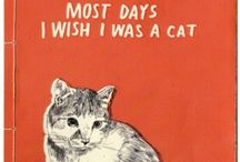 I Love Cats. Don't Judge Me. / by Rachel Brown