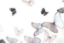 tv | miraculous ladybug / bye, bye little butterfly