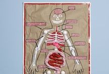 Teaching the Human Body / Activities and art projects for teaching kids about the human body